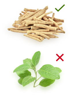 How to pick your Ashwagandha Supplier – KSM-66